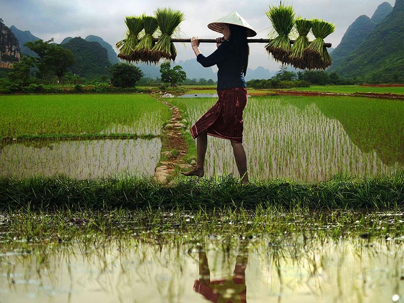 Reisbäuerin mit Garben